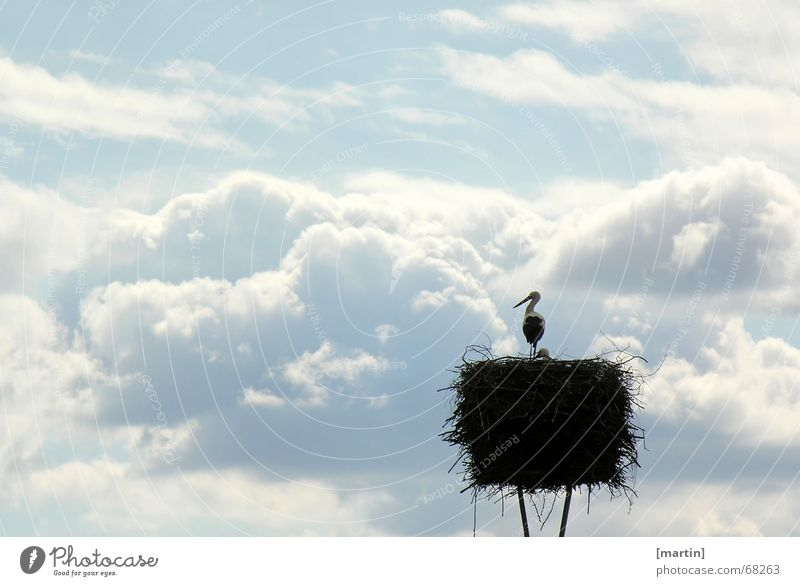 Sky White Blue Calm Clouds Animal Far-off places Bird Free Longing Dusk Nest Offspring Peaceful Stork Eyrie
