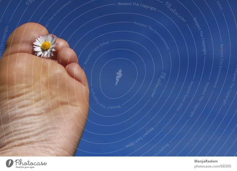 let all fives be straight ... Sky Shoe sole Toes Daisy Recklessness Blue Beautiful weather Feet Far-off places Barefoot