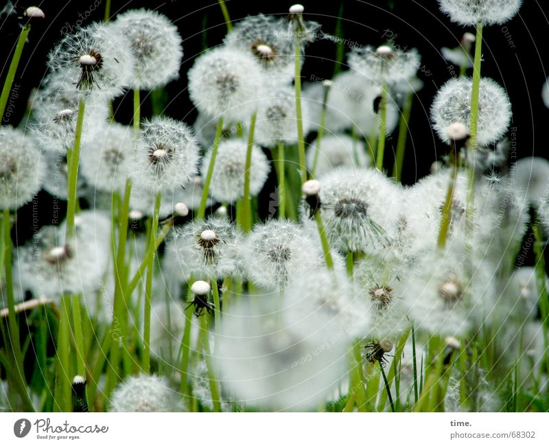 Unity in diversity Meadow Delicate Dandelion Dream Versatile Summer Background picture Black Airy Fragile Mixture Nature Respect Authentic flower late summer