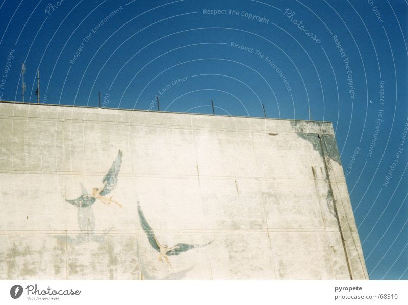 Angel fly ... Building Wall (building) Facade Crumbled Greece Heraklion Vacation & Travel Painting and drawing (object) Sky Blue Old