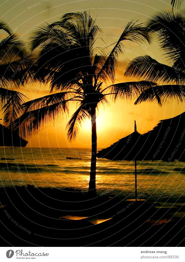 Sunrise at the Indian Ocean Palm tree Couch Roof Sunshade Waves Relaxation Dusk Morning Sunset Stairs sunrise sea Water Evening wave chill Dawn
