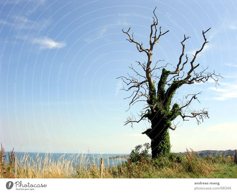 Old Tree Ocean Blue Loneliness Grass Majestic