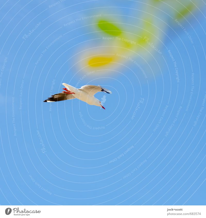 incorporated daub Cloudless sky Australia Seagull 1 Animal Simple Warmth Blue green luck Joie de vivre (Vitality) Willpower Freedom Serene Ease