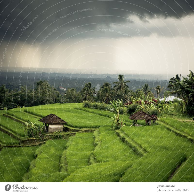 freshly cast Nature Landscape Sky Clouds Rain Plant Agricultural crop Rice Paddy field House (Residential Structure) Hut Gray Green Far-off places Terrace