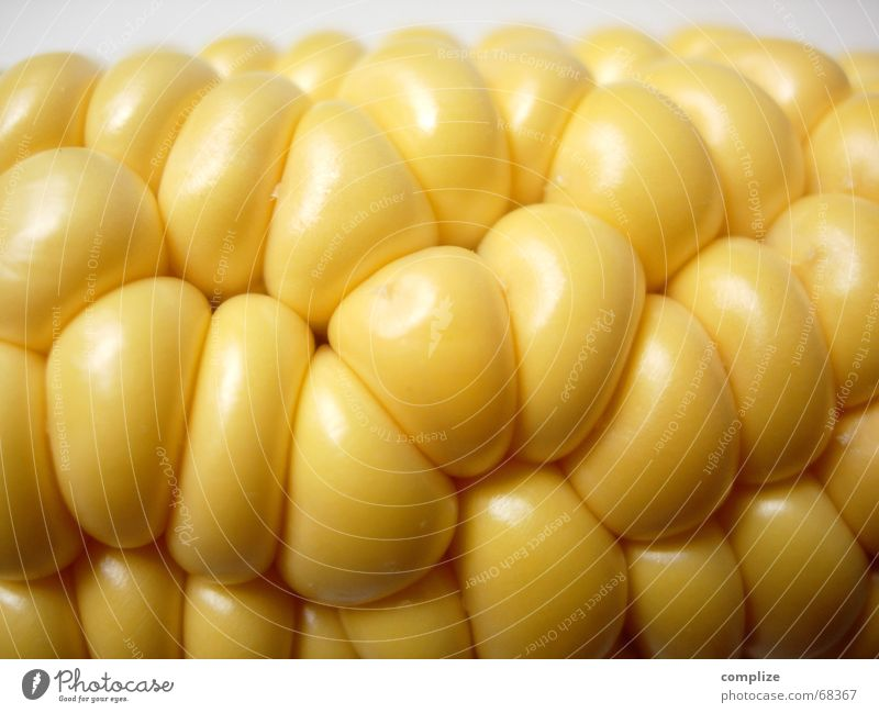 space design Organic Yellow Glittering Corn cob Piston Maize field Field Kitchen Vitamin Restaurant Fine Bubbling Pure Ecological Nutrition Food Ingredients