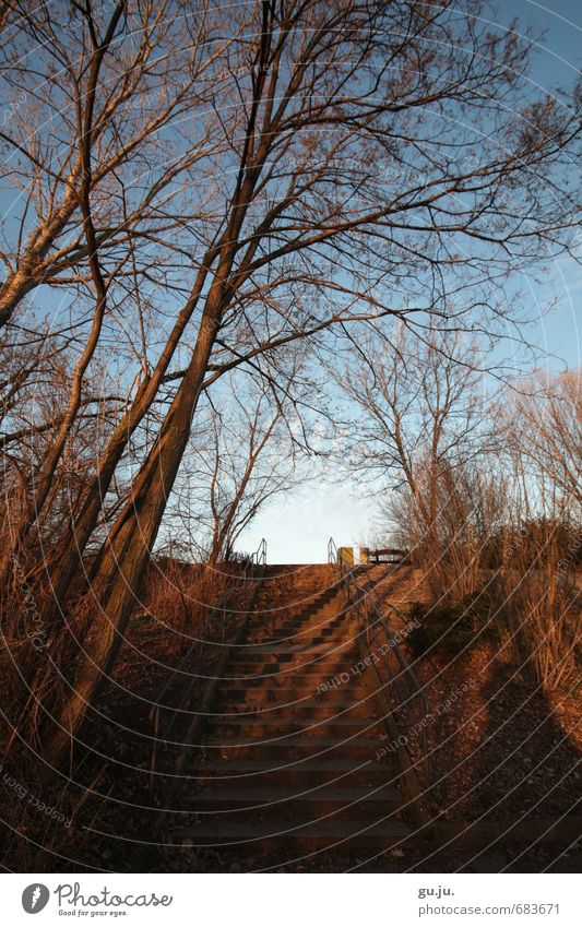 shadow light sky staircase handrail tree branch Trip Environment Nature Landscape Plant Earth Sky Cloudless sky Winter Beautiful weather Tree Bushes Park Hill