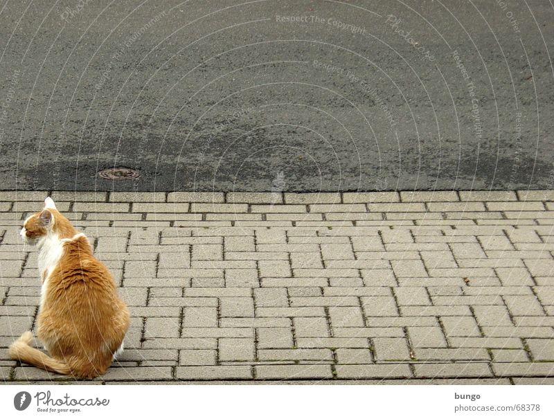 Calm Street Relaxation Sadness Cat Sit Empty Grief Gloomy Asphalt Pelt Sidewalk Boredom Traffic infrastructure Cobblestones Mammal