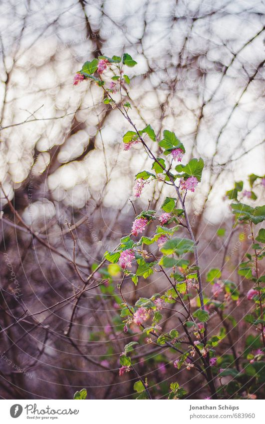 Nature Beautiful Plant Tree Flower Leaf Winter Environment Life Emotions Blossom Pink Park Contentment Bushes Esthetic