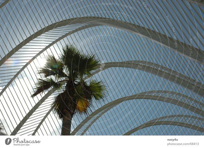 underpalm Palm tree Summer Dream Exterior shot Alicante Architect Sun Sky Metal