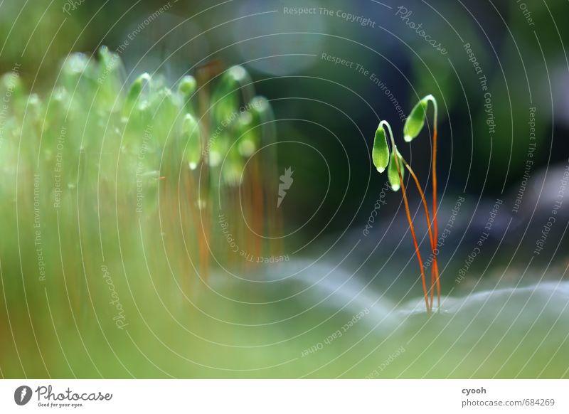 Nature Blue Green Plant Calm Dark Spring Blossom Small Glittering Illuminate Stand Fresh Esthetic Touch Blossoming