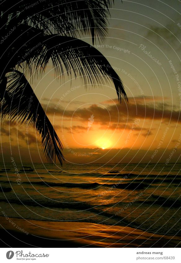 A New Day Begins Palm tree Ocean Sunset Dusk Waves Relaxation Morning Watercraft Clouds Leaf Stairs sunrise sea Lie Evening wave chill Dawn boat boats cloud