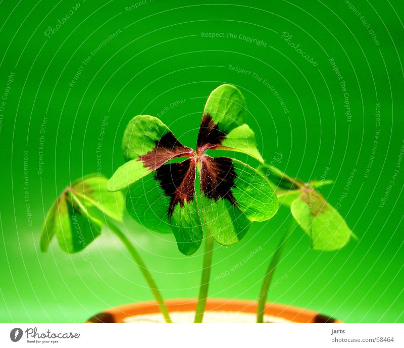 Green Happiness Contentment Lacking Meadow Plant Four-leafed clover Success Seldom Happy Life Nature Beautiful jarts