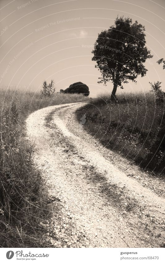 from [WAY] loose Tree Grass Gray Field Horizon Picture book Lanes & trails landscape B/W Nature arduous way Road to nowhere outgrow the horizon feeder alley