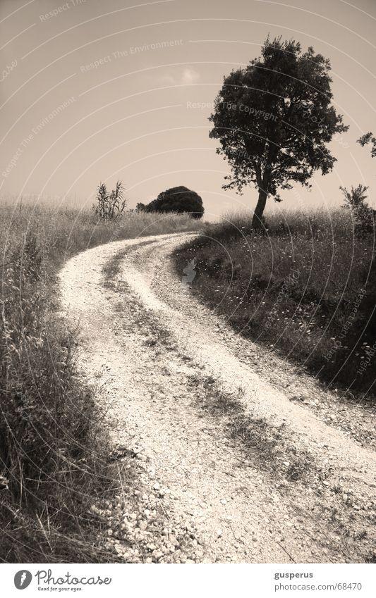 Nature Tree Landscape Gray Grass Lanes & trails Horizon Field Skyline Direction Gravel Picture book