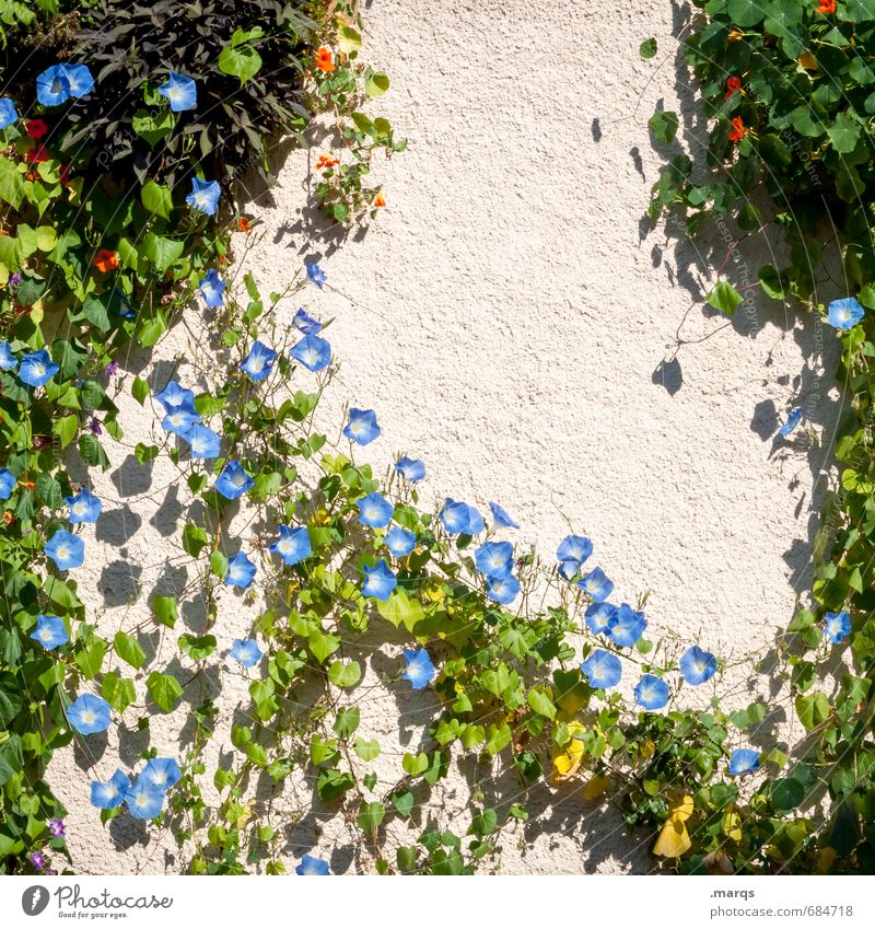 tendrils Living or residing Nature Summer Beautiful weather Flower Bushes Wall (barrier) Wall (building) Blossoming Growth Tendril Colour photo Exterior shot
