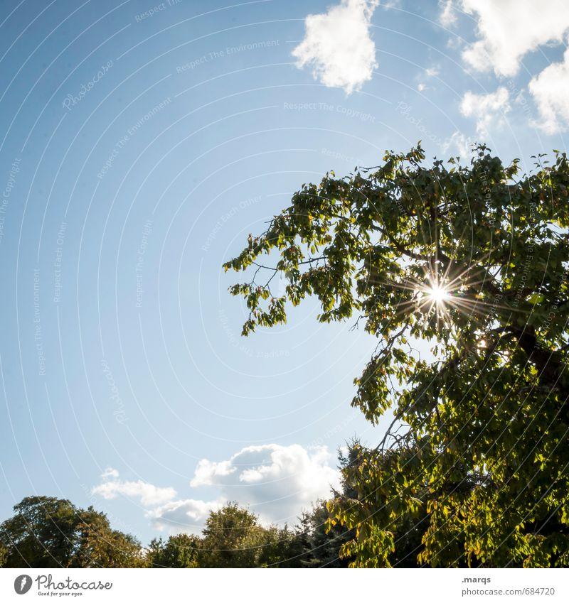 Sky Nature Beautiful Summer Sun Tree Landscape Clouds Environment Life Moody Park Weather Illuminate Climate Beautiful weather