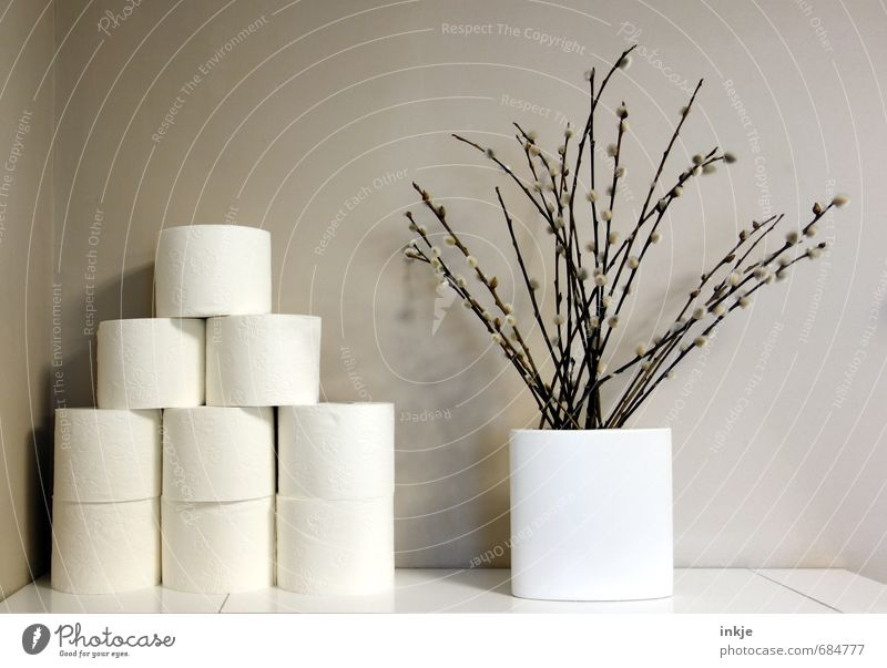 Stock I Style Living or residing Decoration Bathroom Spring Catkin Branch Deserted Wall (barrier) Wall (building) Toilet paper Bouquet Vase Growth Bright Clean