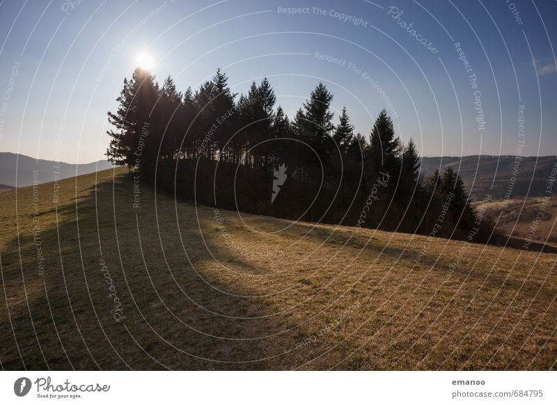 The little wood on the Kaiserstuhl Vacation & Travel Tourism Trip Mountain Hiking Nature Landscape Plant Sky Sun Climate Weather Beautiful weather Warmth Tree