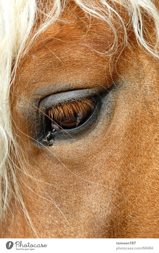 humans in animals Horse Mane Eyes Looking Snapshot