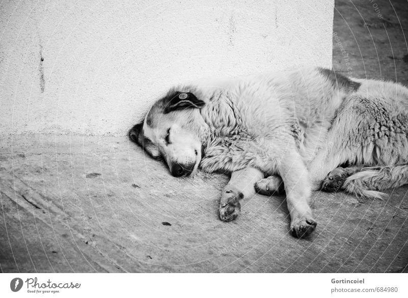 Dog City Animal Wall (building) Street Emotions Wall (barrier) Sleep Pelt Longing Appetite Animal face Fatigue Pain Paw Turkey