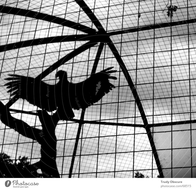 Animal Bird Zoo Grating Captured Germany Enclosure Jail sentence Cage Saxony Dresden District Berlin zoo Zwinger