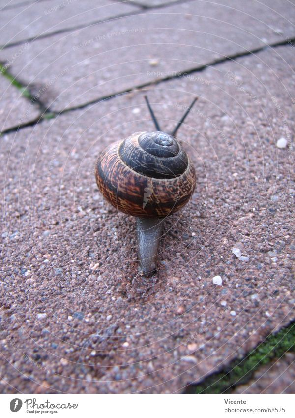 Green Back Peace Tracks Escape Snail Seam Feeler Paving stone In transit Slowly Snail shell Mucus Tentacle