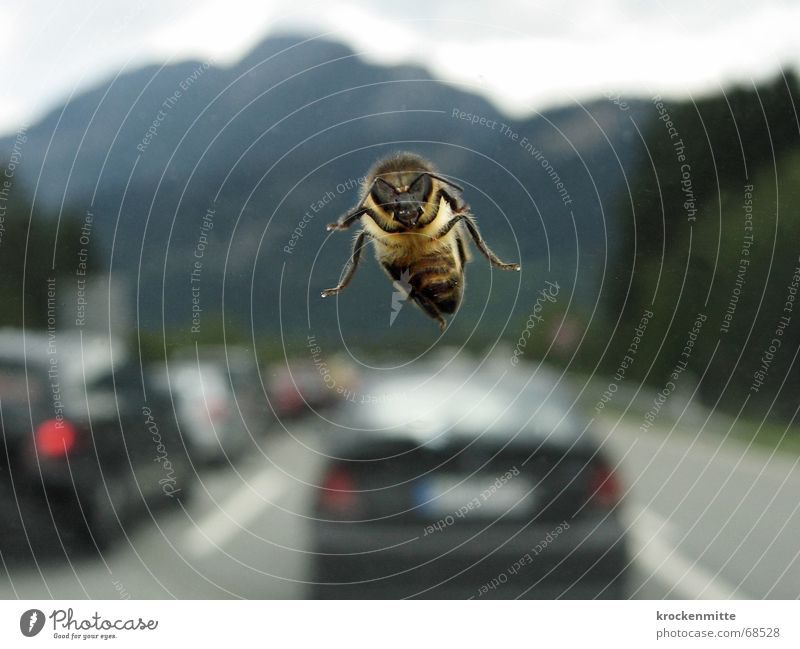 ghost pilots Bee Highway Traffic jam Windscreen Highway drifer Insect Car Mountain Flying Window pane holiday traffic