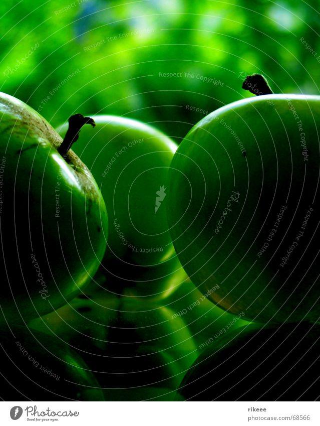 Nature Green Plant Garden Environment Fruit Apple Vegetable Apple tree