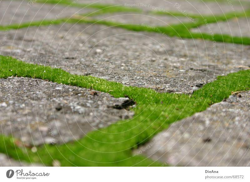 Nature Green Summer Fresh Farm Cobblestones Moss Furrow Rectangle Overgrown Pave