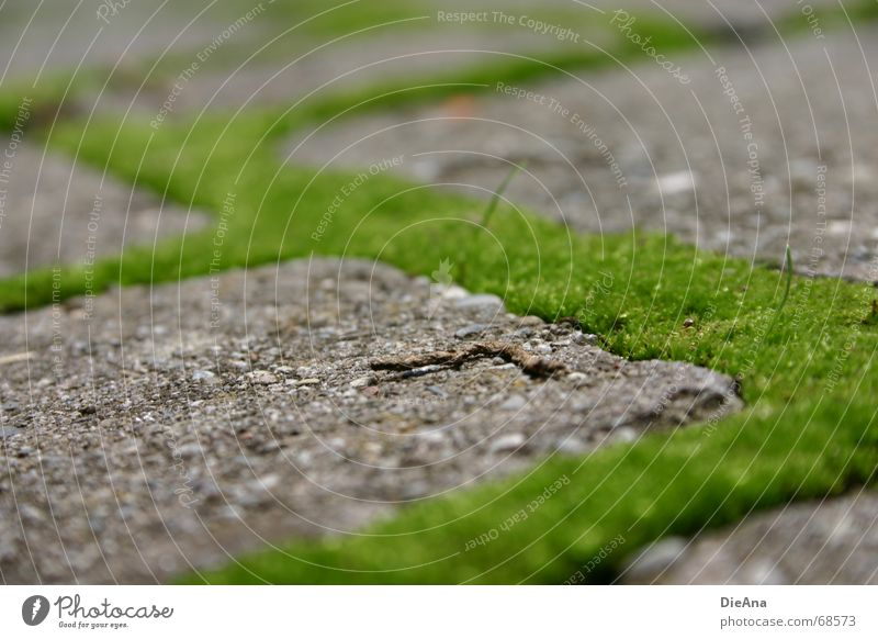 green ways (2) Pave Furrow Overgrown Green Fresh Rectangle Summer Nature Cobblestones Farm Moss cobblestone cobbled chink