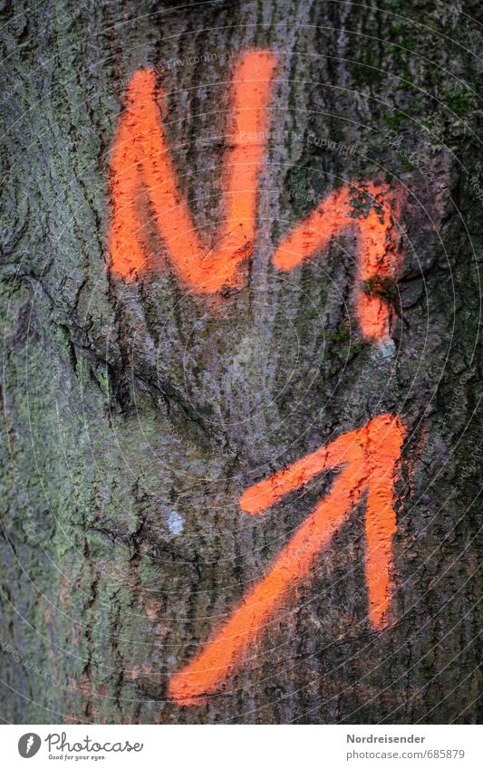 ...and high.... Agriculture Forestry Tree Sign Characters Digits and numbers Signs and labeling Orange Puzzle Arrow Trend-setting Upward Number one Success