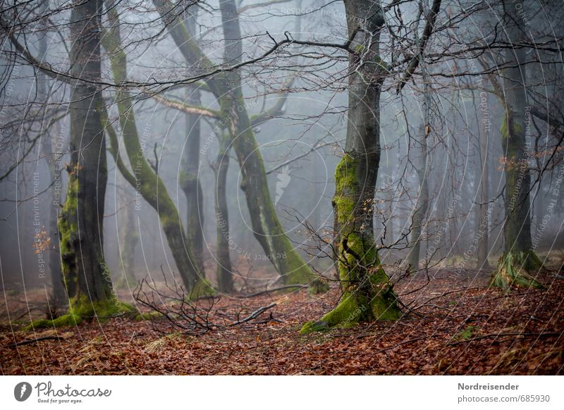 Nature Tree Loneliness Dark Forest Lanes & trails Moody Fear Weather Fog Growth Hiking Trip Threat Agriculture Creepy