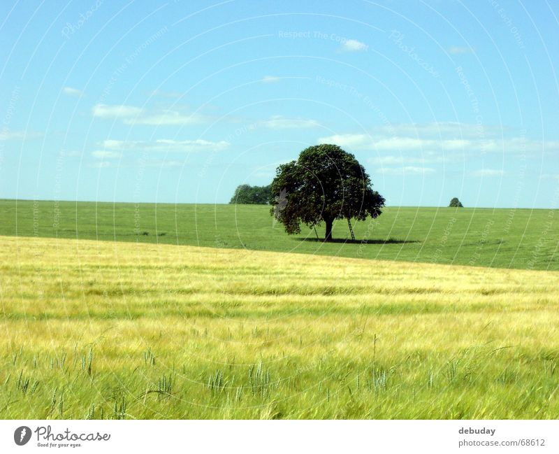 meeting place Tree Round Large Field Immature Green Yellow Far-off places Appealing Summer's day Ear of corn Maturing time Physics Vantage point Romance
