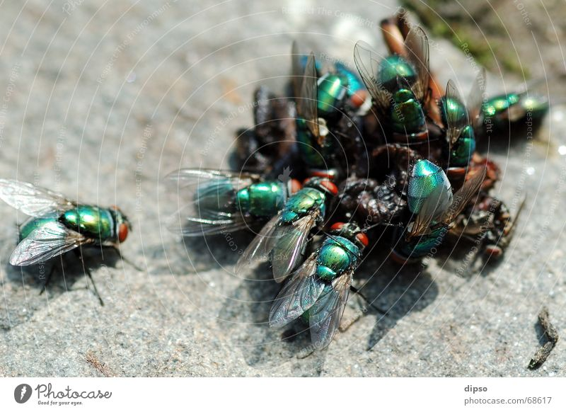 Nature Green Flying Appetite Disgust Meal Accumulation Stone floor