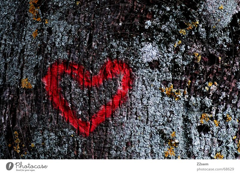 Nature Tree Red Love Dark Heart Carve