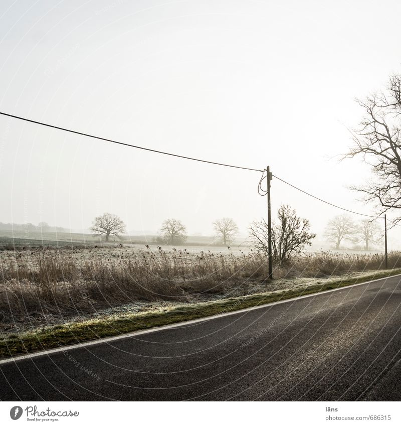 Weather l Early mist Environment Nature Landscape Sky Fog Tree Field Transport Traffic infrastructure Street Lanes & trails Gray Beginning Vacation & Travel