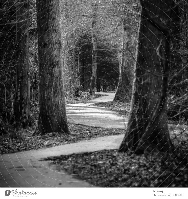 Zig Zag Nature Tree Forest Expectation Serene Curiosity Lanes & trails Park Tilt Deep Zigzag Black & white photo Exterior shot Deserted Day Light Shadow