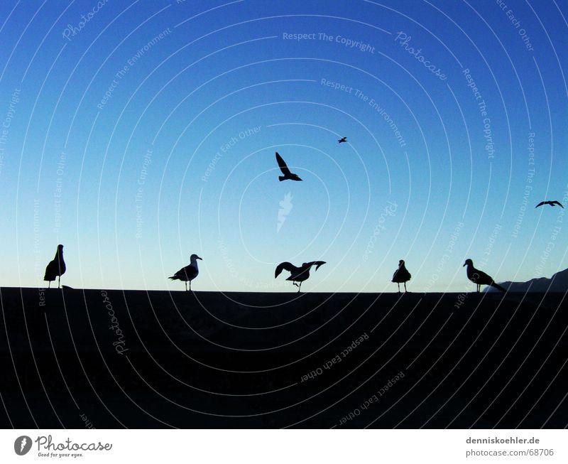 Möööve ya! Seagull Animal Bird Airplane Wall (barrier) Back-light Dark Playing Exterior shot Coast Beach Wing Flying Aviation Sit Sky Blue Contrast Bright