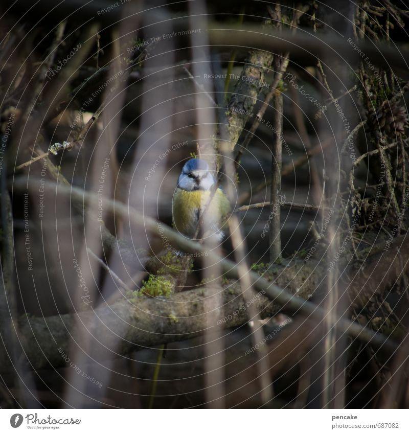 Nature Landscape Animal Spring Bird Earth Bushes Elements Sign Discover Hide Marsh Camouflage Spring fever Bog Tit mouse