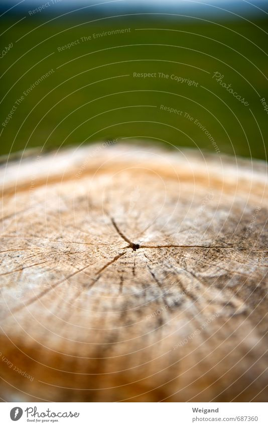Roundabout and intersection Environment Nature Field Forest Old Contentment Joie de vivre (Vitality) Honor Power To console Calm Truth Purity Modest Wood