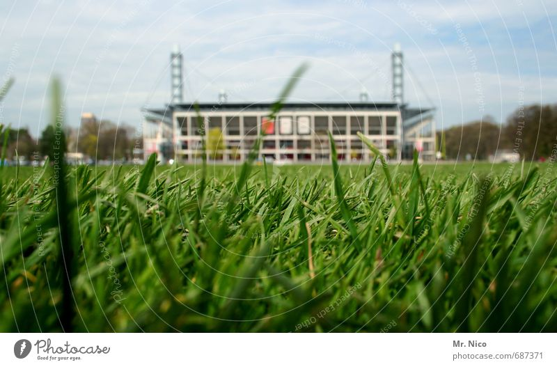 Sky Nature Green Environment Meadow Sports Grass Architecture Moody Leisure and hobbies Manmade structures Blade of grass Sporting event Audience Fan Stadium