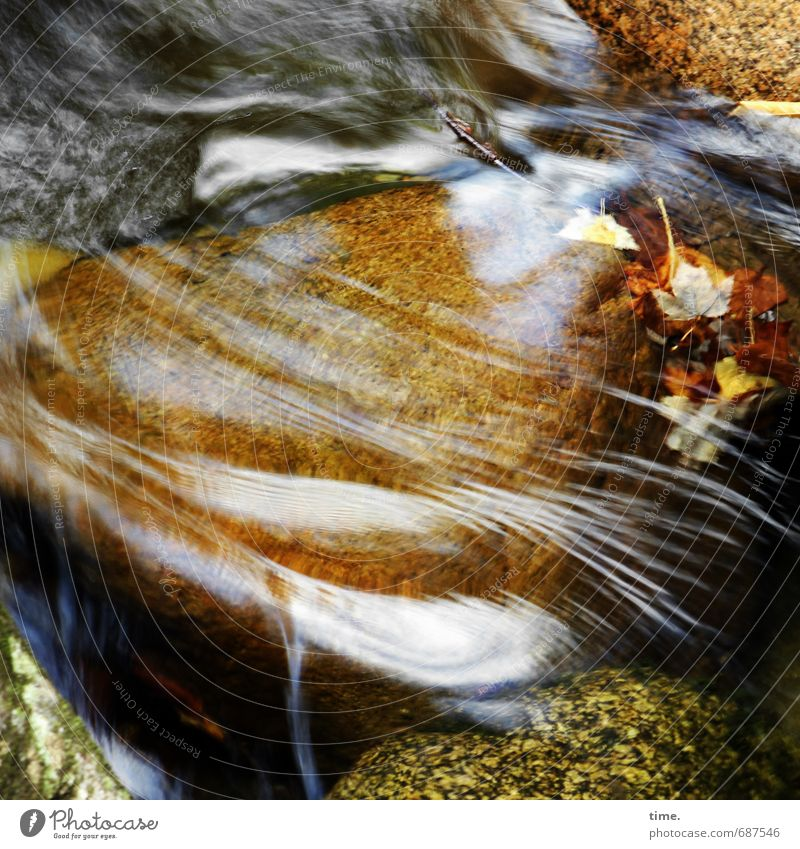 Cost.bar lifelines. Environment Nature Plant Elements Water Autumn Leaf Rock Mountain Waterfall Brook Stone Line Movement Authentic Purity Elegant Speed Idyll