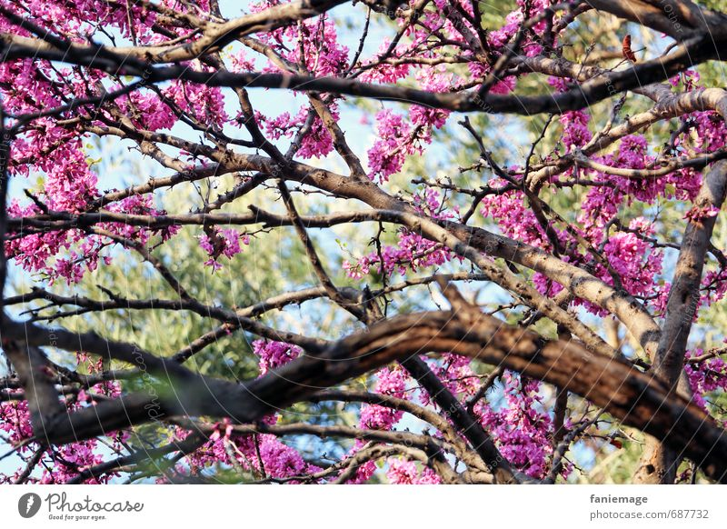 flower dream Nature Tree Blossom Romance Beautiful Love Senses printemps Spring Cherry blossom Cherry tree Pink Bright green Light blue Pastel tone Treetop