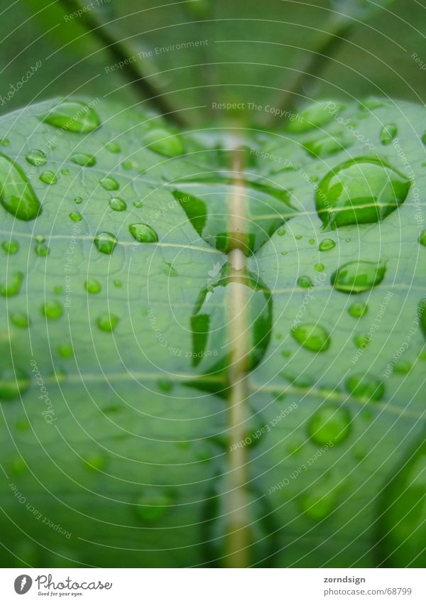 Water Green Plant Leaf Rain Drops of water Wet Rope Mirror Damp