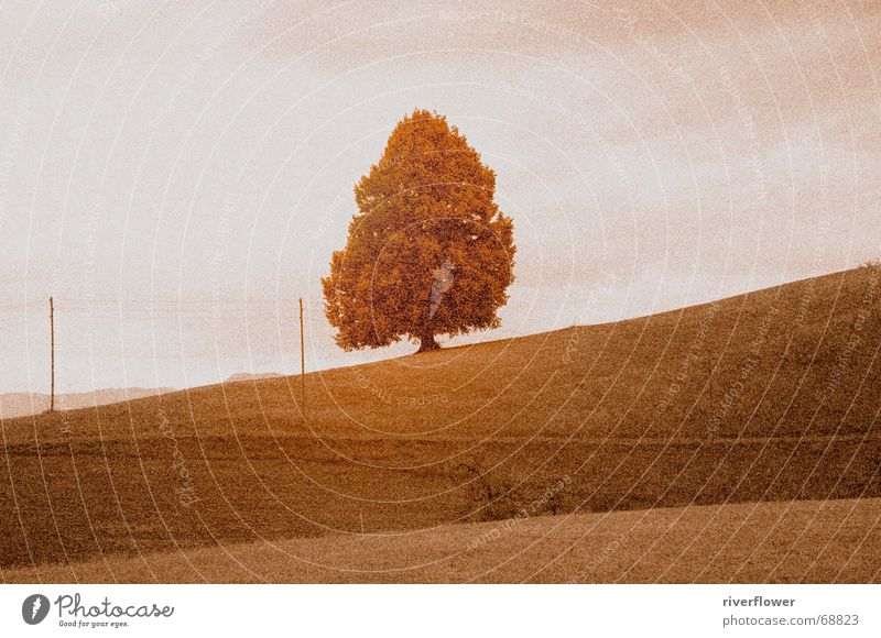 Swiss pasture Tree Field Light Meadow Old fashioned Landscape Sky Structures and shapes Colour