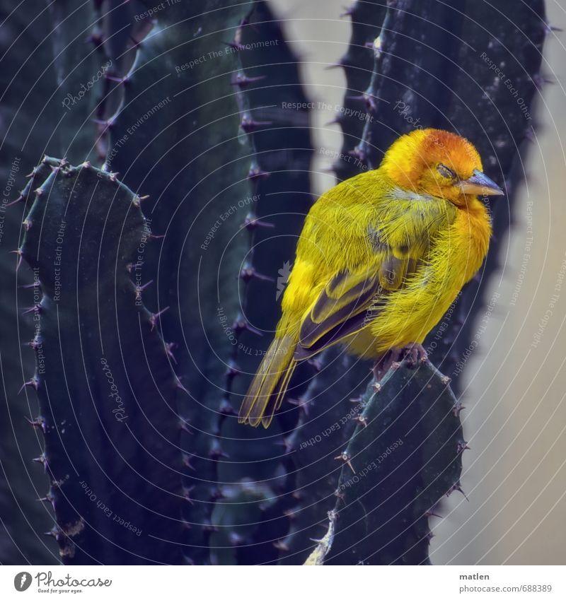 Nature Green Plant Animal Yellow Bird Sleep Cactus