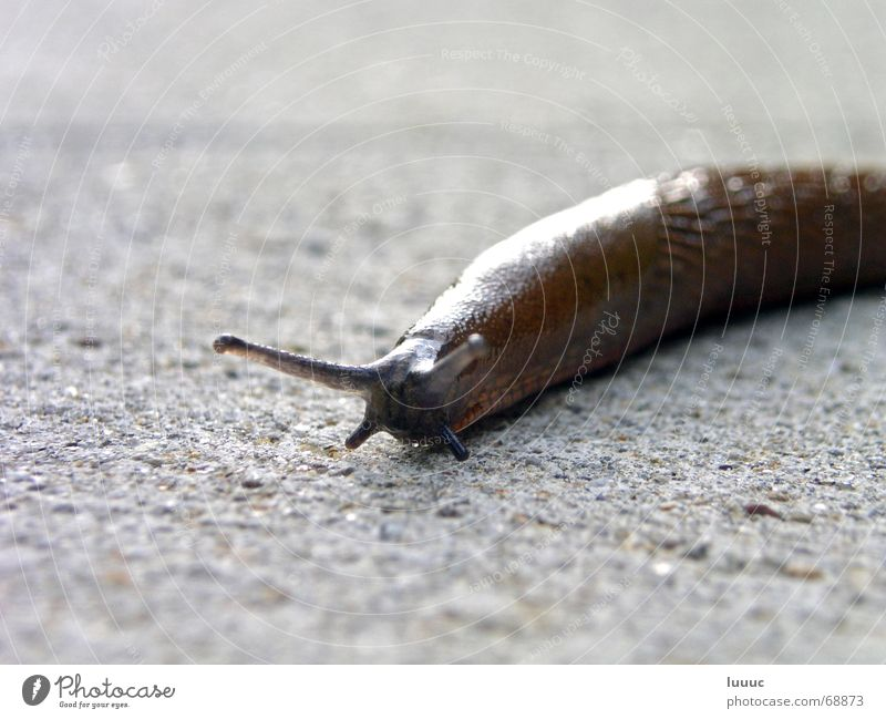 Sun Summer Stone Warmth Bright Brown Time Floor covering Physics Damp Disgust Snail Antlers Caution Crawl Slowly