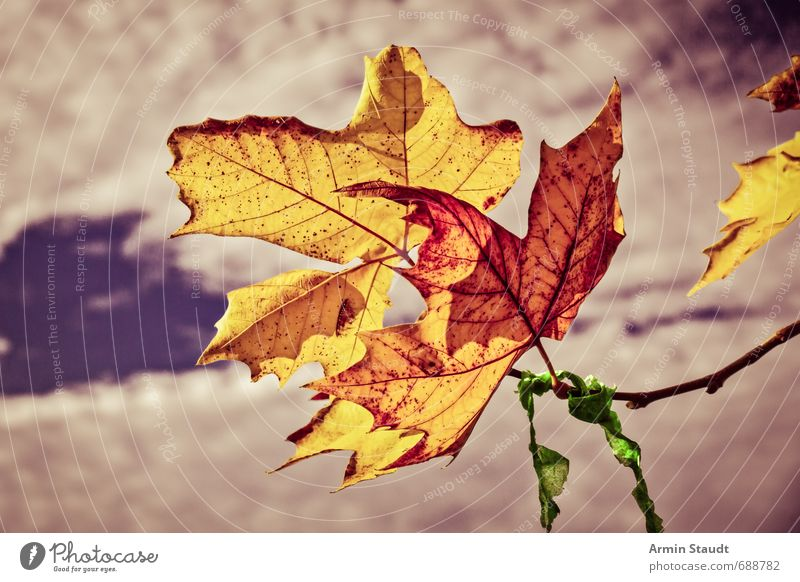 Sky Nature Old Plant Clouds Leaf Yellow Life Autumn Death Moody Together Authentic Beautiful weather Simple Touch