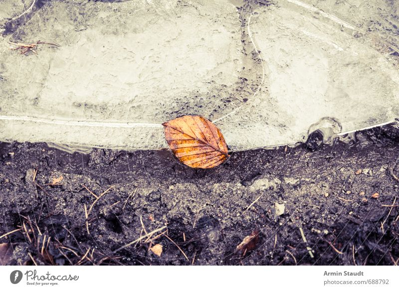 Lonely leaf on ice floe Winter Nature Earth Water Ice Frost Leaf Forest Old To fall Lie Esthetic Authentic Dirty Dark Beautiful Brown Moody Death Senior citizen