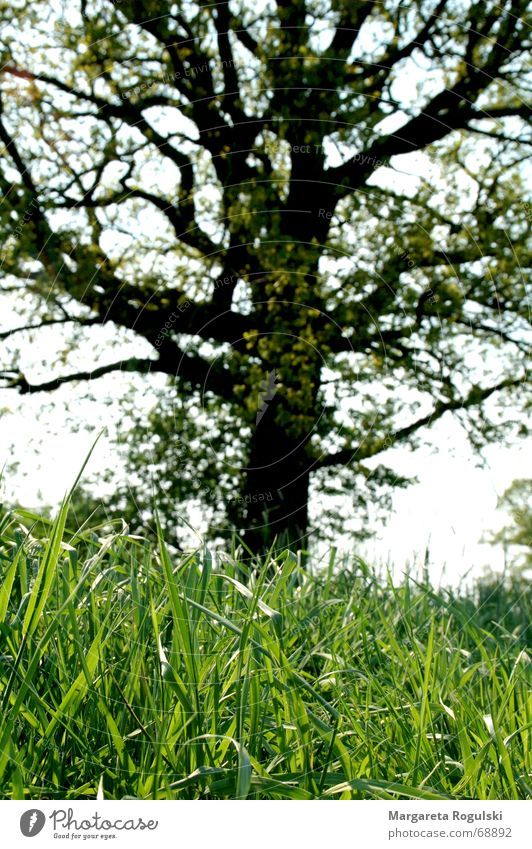 green grass Grass Tree Green Meadow Blade of grass Nature Pasture Exterior shot